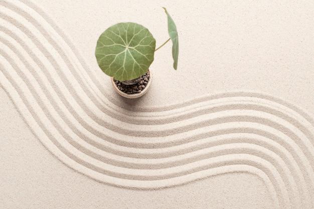 Plantar no fundo de areia da praia no conceito de saúde e bem-estar