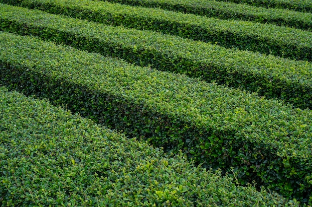 Plantar no jardim, loja de café