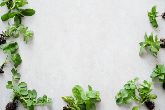 Plantar. planta de casa na mesa