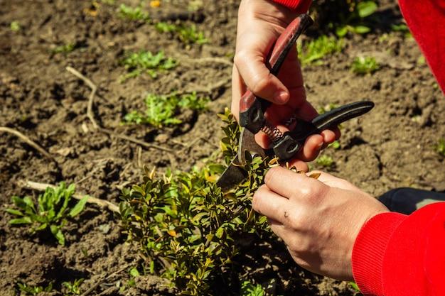 Plantar plantas em terreno aberto na primavera com uma pá