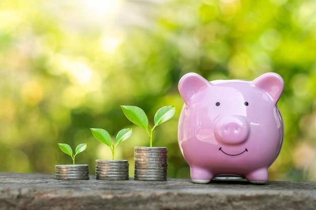 Plantar uma planta na moeda é um conceito financeiro, investir e gerar economias para o futuro.