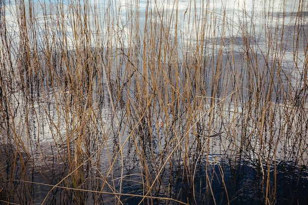Plantas aquáticas secas