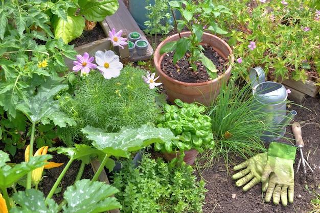 Plantas aromáticas e vegetais crescendo em jardim com ferramentas de jardinagem no solo