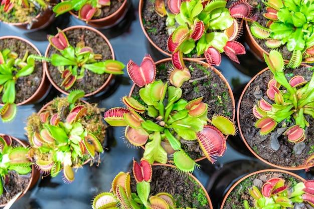 Plantas carnívoras em vasos de flores em um jardim botânico.