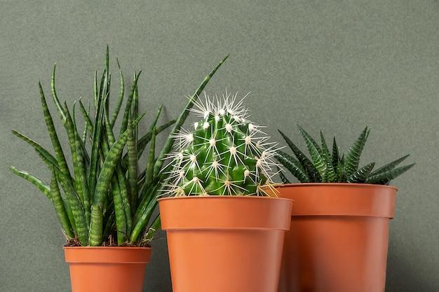 Plantas caseiras. suculentas e cactos em vasos marrons em uma superfície verde