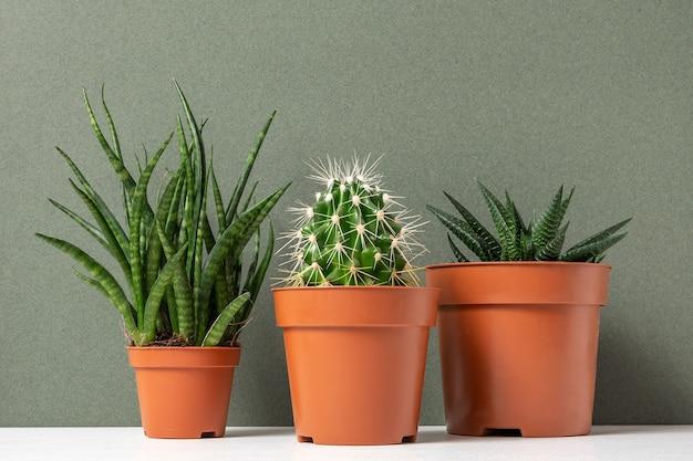 Plantas caseiras. suculentas e cactos em vasos marrons na mesa contra uma superfície verde
