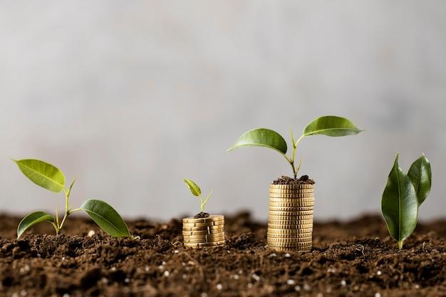 Plantas com moedas empilhadas na terra