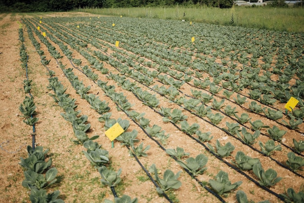 Plantas, crescendo, em, a, campo