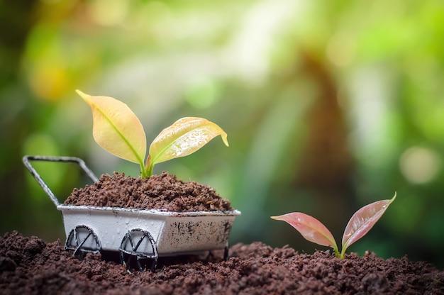 Plantas crescendo em carrinho de mão