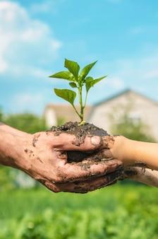 Plantas da criança e do pai no jardim.