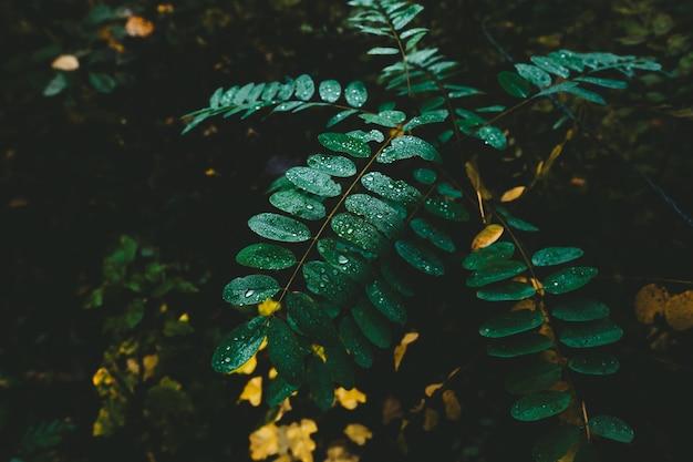 Plantas da floresta de manhã cheia de orvalho