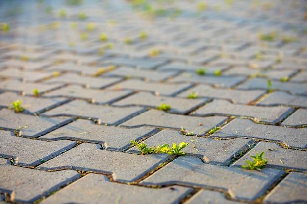Plantas daninhas que crescem entre tijolos de pavimento de concreto.
