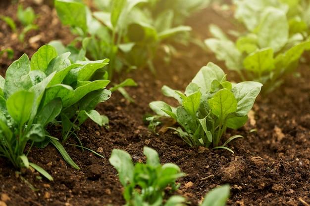 Plantas de alto ângulo com folhas verdes
