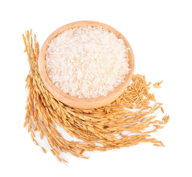 Plantas de arroz com arroz branco e arroz não moído isolado no branco