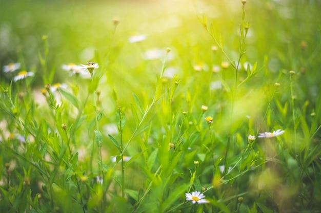 Plantas de campo turva com flores brancas