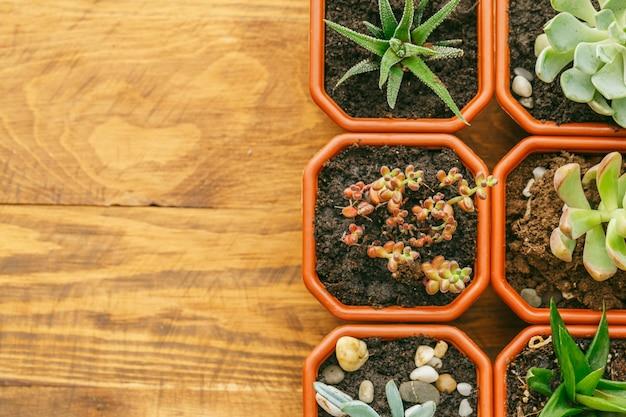 Plantas de casa com flores suculentas.