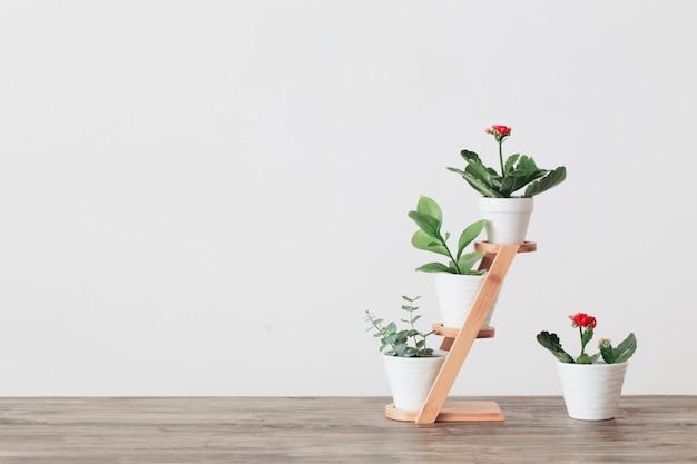 Plantas de casa contra uma parede branca na mesa de madeira