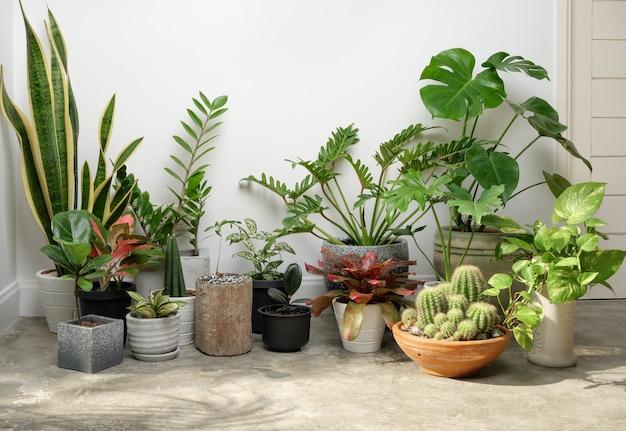 Plantas de casa em um recipiente moderno e elegante no piso de cimento em um quarto branco purificado com monsteraphilodendron selloum cactusaroid palmzamioculcas zamifoliaficus lyrataspotted betelsnake plant