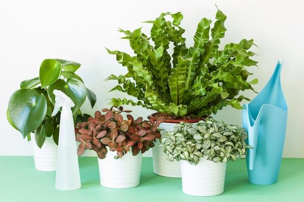 Plantas de casa em vaso