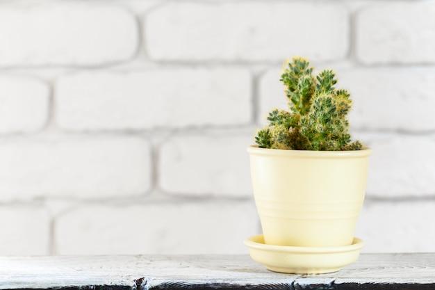 Plantas de casa em vasos na mesa branca na parede de tijolos brancos com objetos