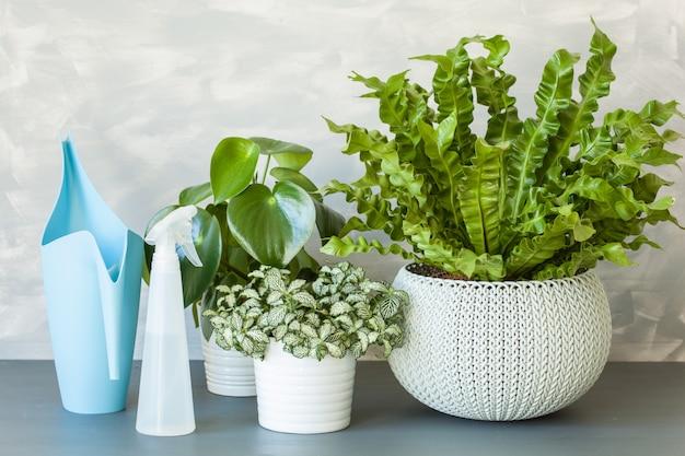 Plantas de casa em vasos