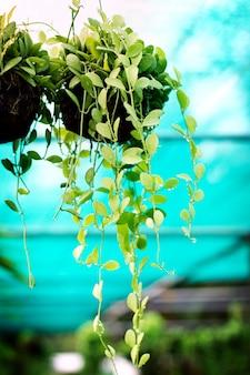 Plantas de casa na água cai em uma vegetação
