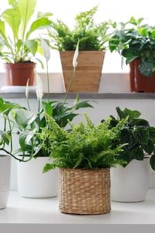 Plantas de casa tropical