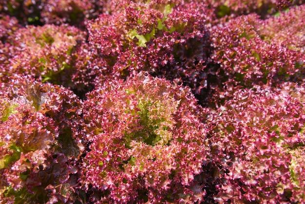 Plantas de coral vermelho