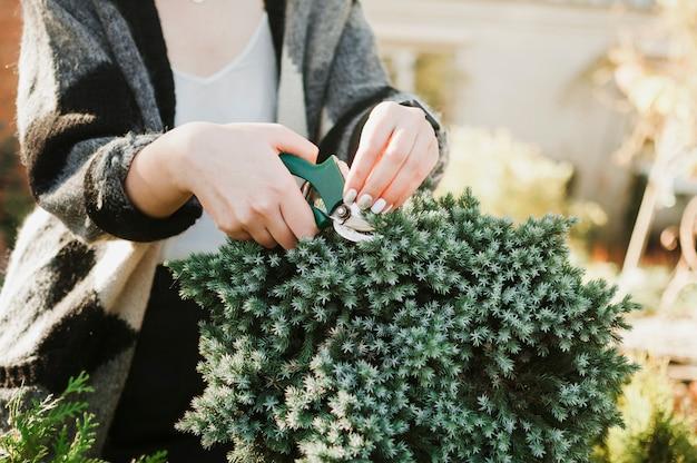 Plantas de corte