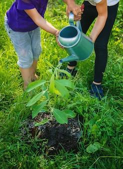 Plantas de criança e regar plantas no jardim