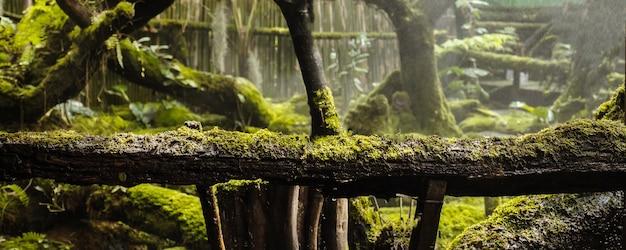 Plantas de estilo de musgo e samambaia cobrem o chão da floresta no jardim.