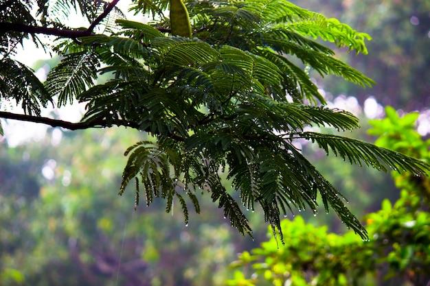 Plantas de folhagem de floresta tropical arbustos samambaias folhas verdes filodendros e plantas tropicais