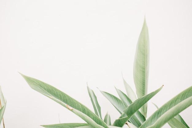Plantas de folhas verdes perto de parede bege