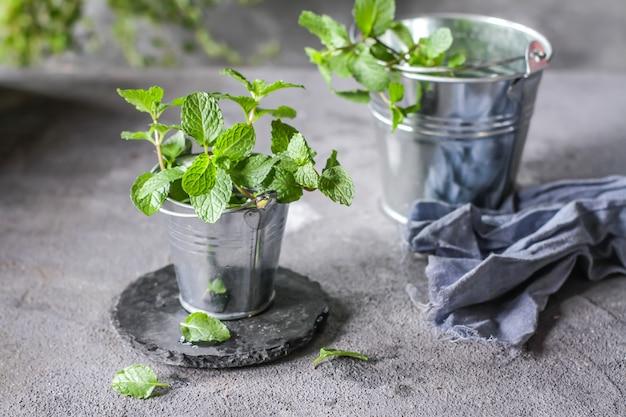 Plantas de hortelã fresca em uma panela