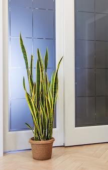 Plantas de interior em vasos de sansevieria fundo de jardim verde decoração para casa decoração de espaço de cópia
