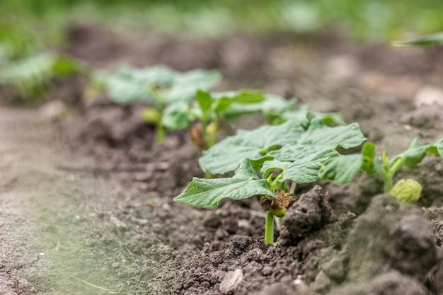 Plantas de jardim orgânico em close-up