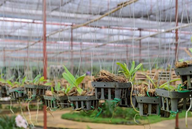 Plantas de orquídea em um viveiro