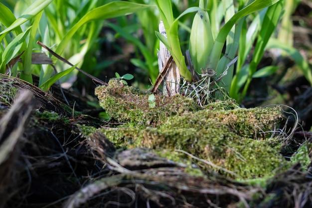 Plantas de orquídeas frescas no berçário de orquídea