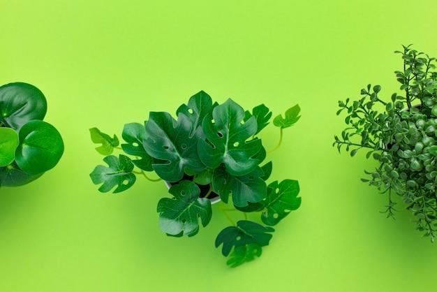 Plantas de plástico verdes gramíneas em vasos na vista superior isolada de fundo verde