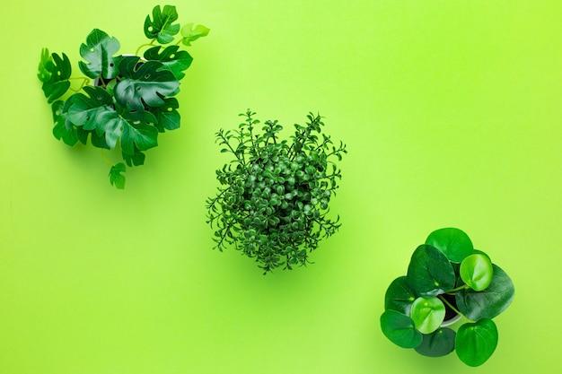 Plantas de plástico verdes gramíneas em vasos sobre fundo verde isoladas