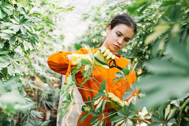 Plantas de poda linda jardineiro feminino com tesouras de podar