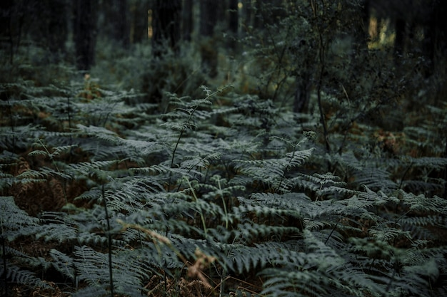 Plantas de samambaia crescendo na floresta tropical