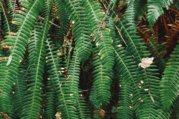 Plantas de samambaia verde