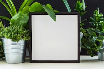 Plantas de vaso verde fresco perto da moldura branca na mesa