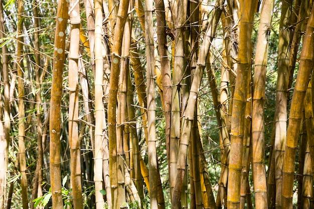 Plantas de vegetação rasteira tropical em floresta no sri lanka. paisagem do ceilão