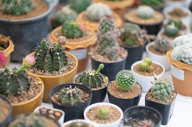 Plantas desérticas de foco seletivo em plantas pequenas. suculentas e cactos em diferentes potes de concreto. decoração para casa.