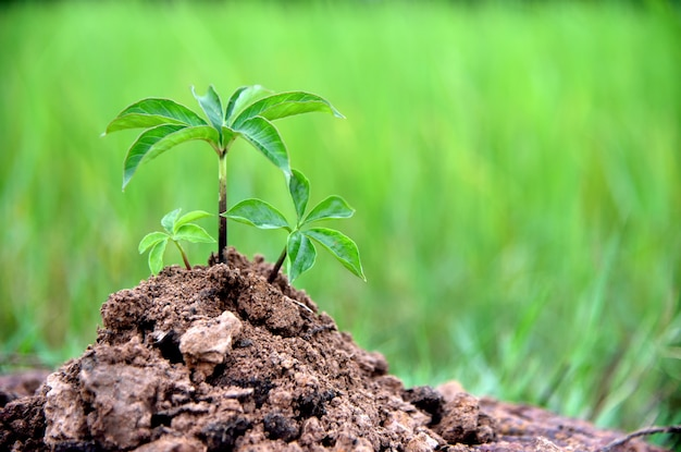Plantas do bebê no solo no fundo verde da natureza, conceitos da terra e da ecologia ambientais.