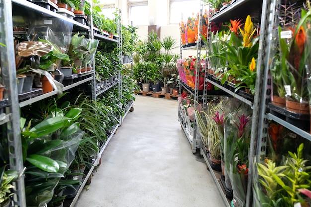 Plantas domésticas ou floristas, filas internas de plantas caseiras em vasos embalados para transporte e venda