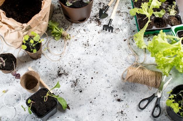 Plantas e ferramentas de jardinagem. vista do topo. copyspace