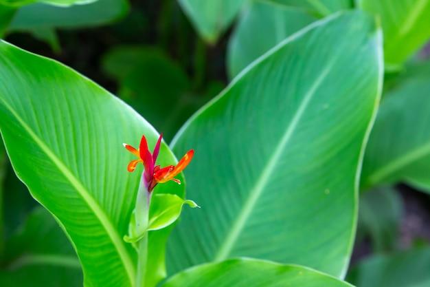 Plantas e flores coloridas na ilha de madagascar